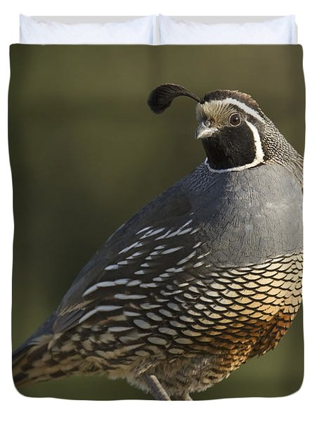 California Quail Male Santa Cruz Duvet Cover by Sebastian Kennerknecht