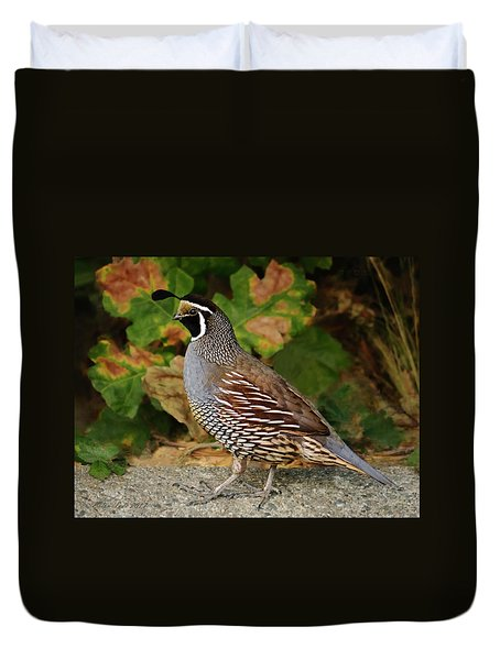 California Quail Rooster Duvet Cover