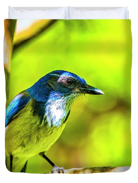 California Scrub Jay Duvet Cover