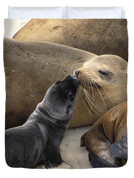California Sea Lion And Newborn Pup San Duvet Cover by Suzi Eszterhas
