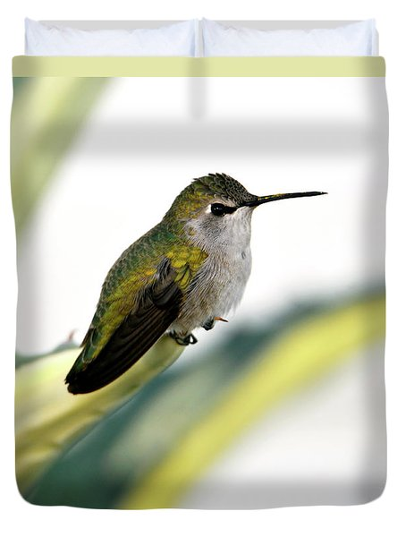 Calliope Hummingbird On Agave Duvet Cover