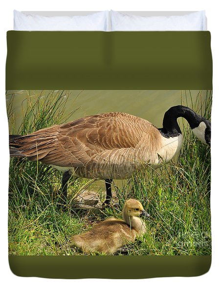 Canada Geese Parent And Child  Duvet Cover by Merrimon Crawford