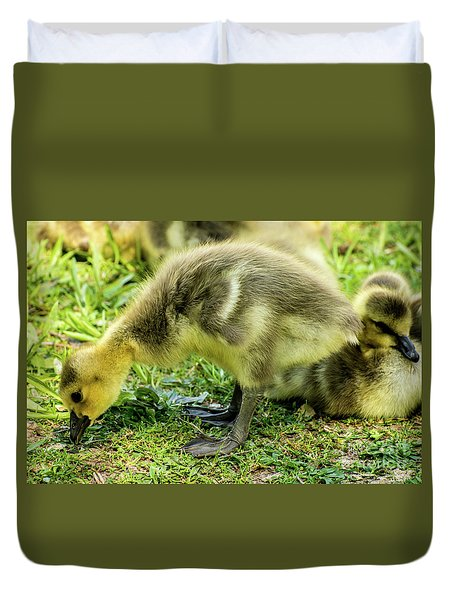 Canada Goose Gosling Duvet Cover by Gary Whitton