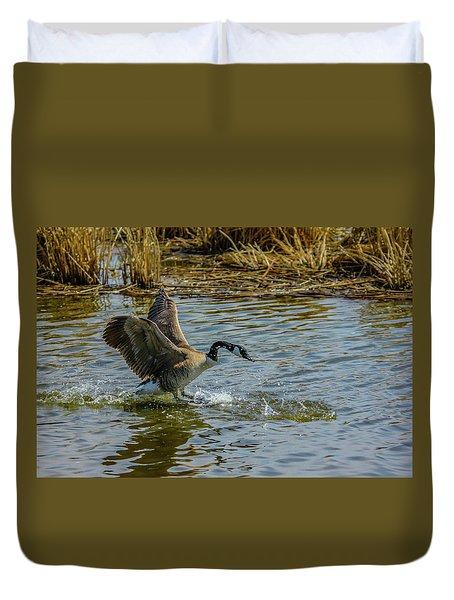 Canada Goose Takes Flight, Frank Lake, Alberta, Canada Duvet Cover