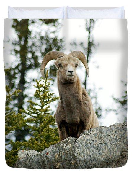 Canadian Bighorn Sheep Duvet Cover