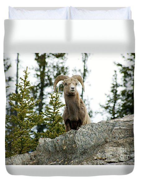 Canadian Bighorn Sheep Duvet Cover