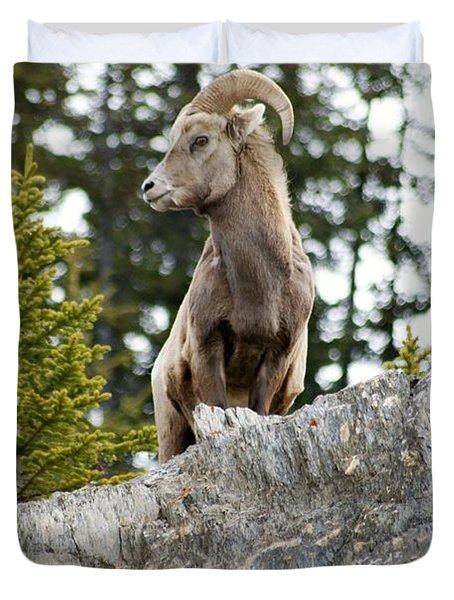 Canadian Bighorn Side Profile Duvet Cover