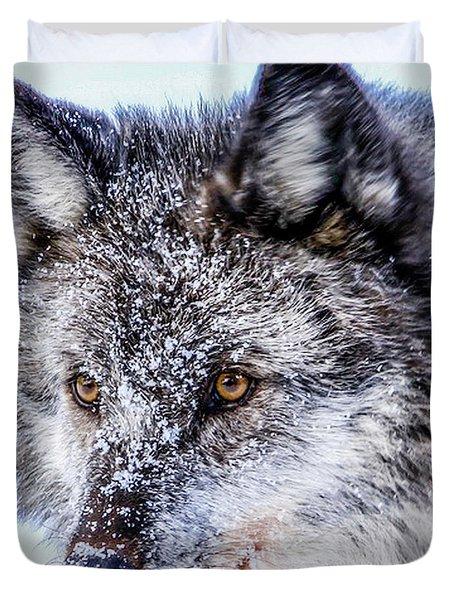 Canadian Grey Wolf In Portrait, British Columbia, Canada Duvet Cover