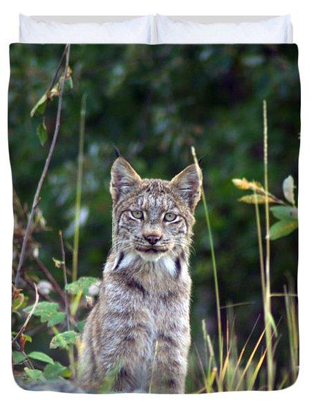 Canadian Lynx Duvet Cover