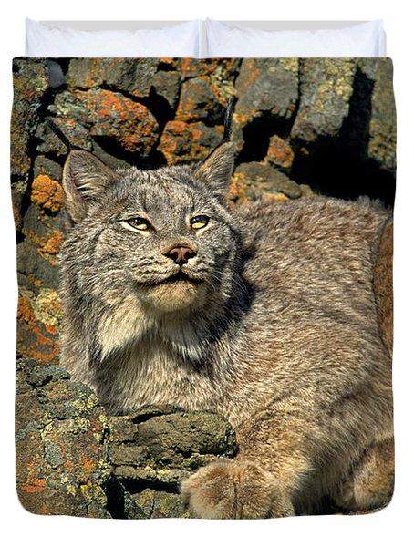 Duvet Cover featuring the photograph Canadian Lynx On Lichen-covered Cliff Endangered Species by Dave Welling