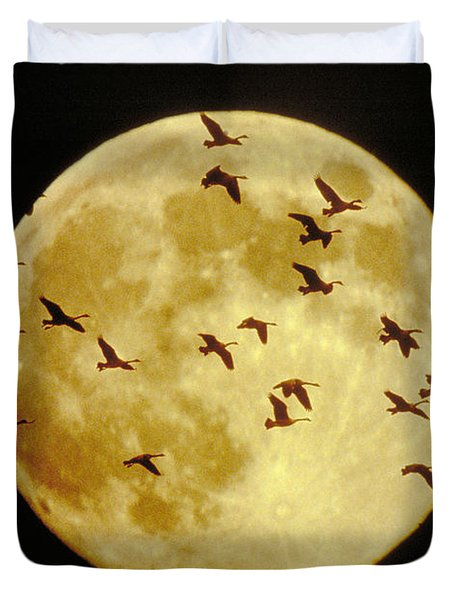 Canda Geese And Moon Duvet Cover by Kenneth Fink and Photo Researchers