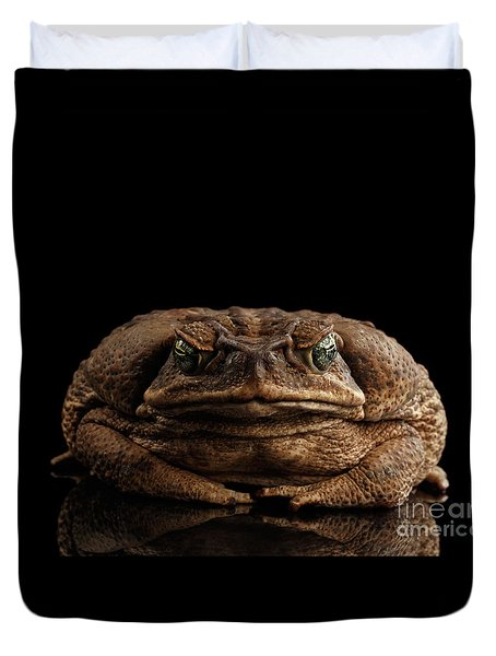 Cane Toad - Bufo Marinus, Giant Neotropical Or Marine Toad Isolated On Black Background, Front View Duvet Cover