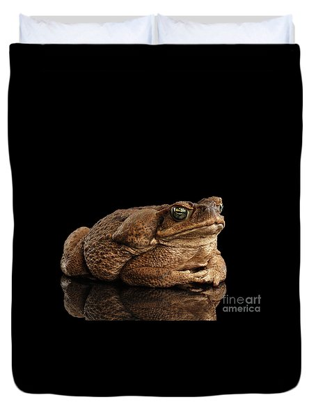 Cane Toad - Bufo Marinus, Giant Neotropical Or Marine Toad Isolated On Black Background Duvet Cover