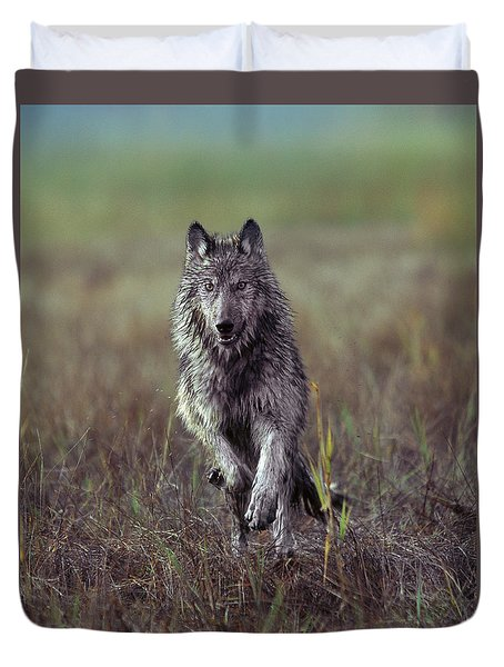 Canis Lupus Duvet Cover by Tim Fitzharris