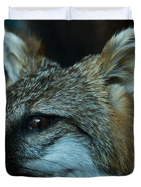 Canis Species Duvet Cover by Douglas Barnett