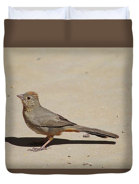 Canyon Towhee Begs Duvet Cover