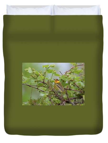 Cape May Warbler Duvet Cover