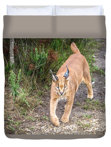Duvet Cover featuring the photograph Caracal Hunting by Gregory Daley  PPSA