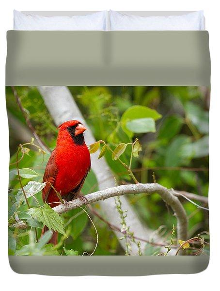Cardinal 147 Duvet Cover