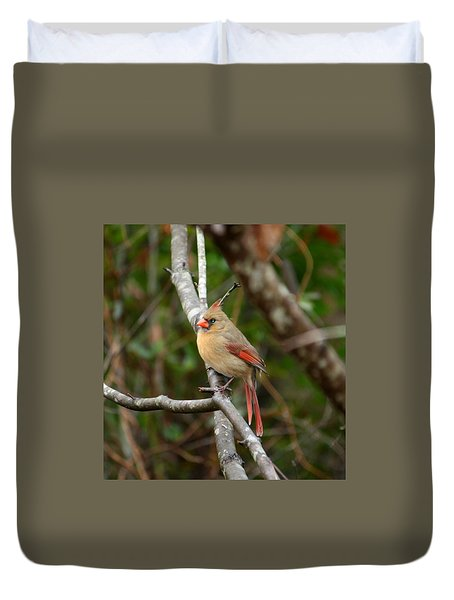 Duvet Cover featuring the photograph Cardinal by Cathy Harper