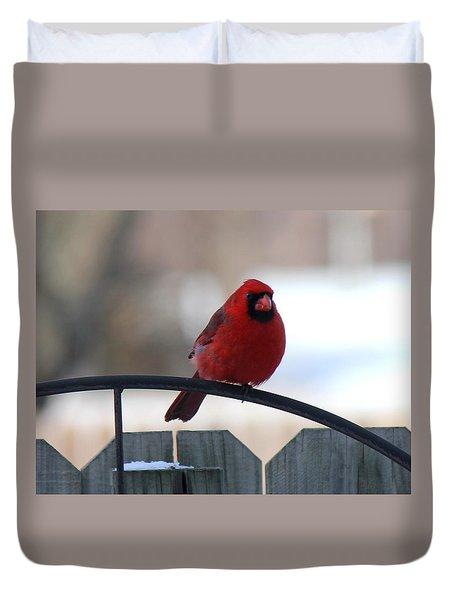Cardinal Closeup Duvet Cover