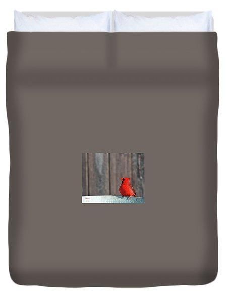 Cardinal Drinking Duvet Cover