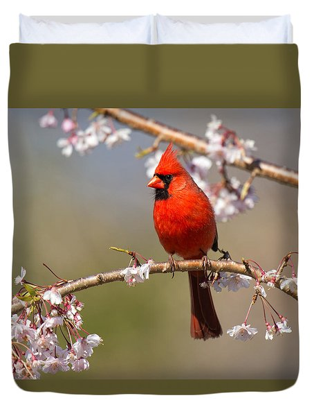 Cardinal In Cherry Duvet Cover by Angel Cher