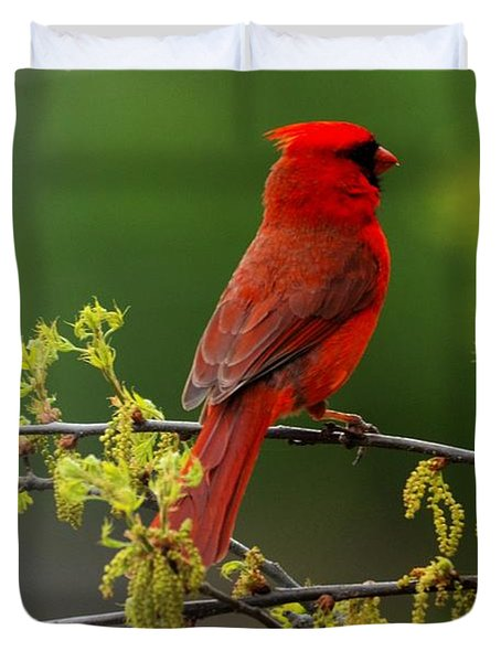 Cardinal In Early Spring Duvet Cover