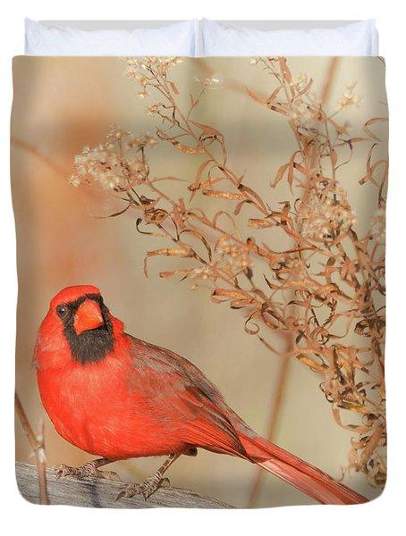 Cardinal In Fall  Duvet Cover