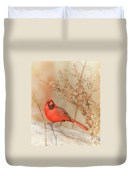 Cardinal In Fall  Duvet Cover
