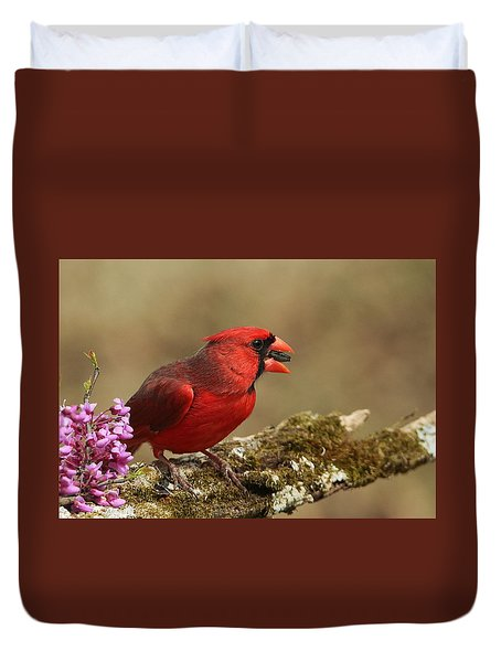 Cardinal In Spring Duvet Cover by Sheila Brown