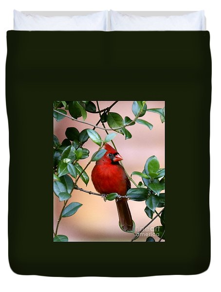 Cardinal In The Jasmine Duvet Cover by Myrna Bradshaw