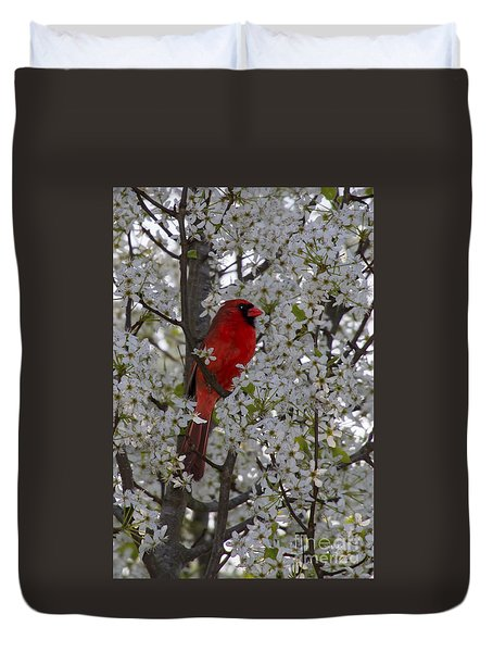 Duvet Cover featuring the photograph Cardinal In White Blossoms by Barbara Bowen