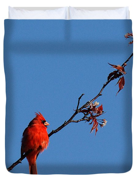 Duvet Cover featuring the photograph Cardinal On A Cherry Branch Dsb033 by Gerry Gantt