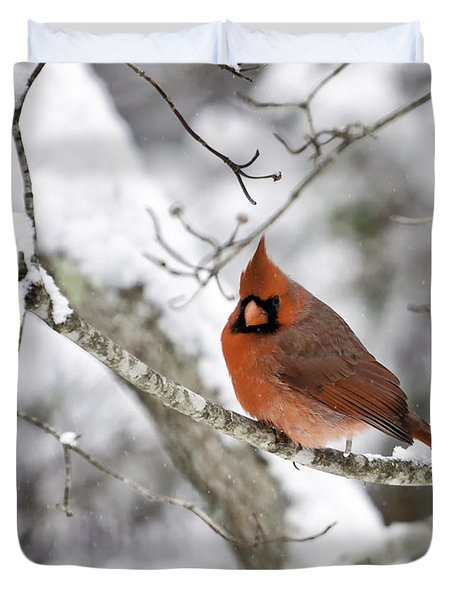 Cardinal On Snowy Branch Duvet Cover by Rob Travis