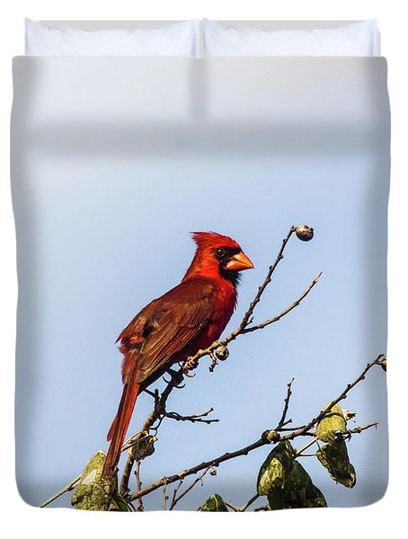 Duvet Cover featuring the photograph Cardinal On Treetop by Robert Frederick