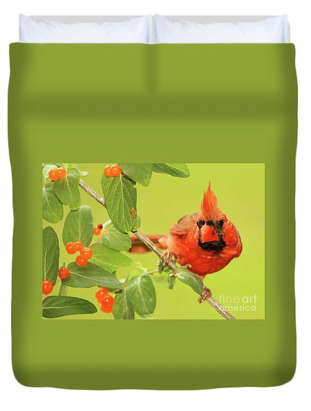 Cardinal Peeking Out From Berries Duvet Cover by Max Allen