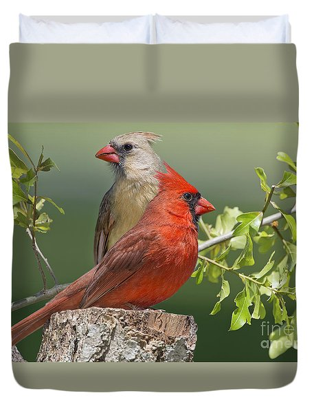 Cardinal Sentries Duvet Cover by Bonnie Barry