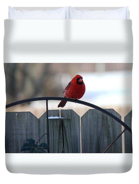 Cardinal Duvet Cover