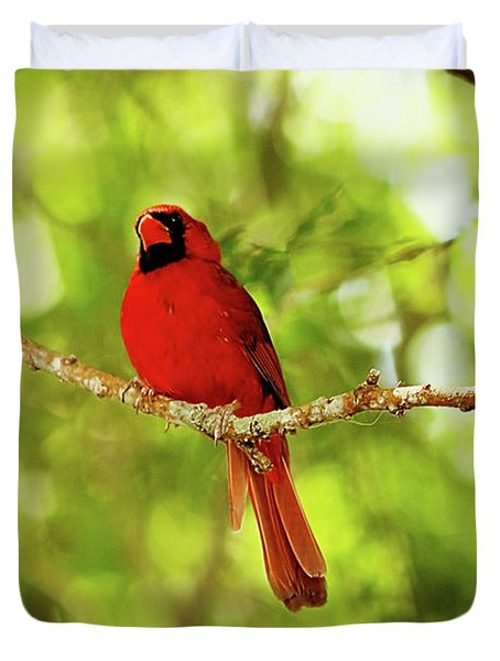 Cardinal Stare Duvet Cover