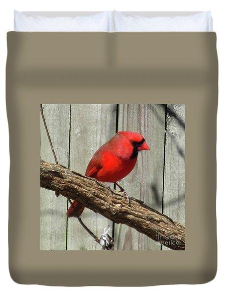 Cardinal Waiting For Spring Duvet Cover