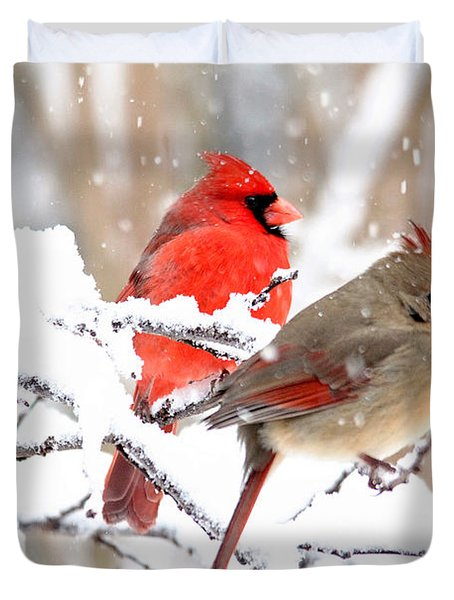 Cardinals In The Winter Duvet Cover