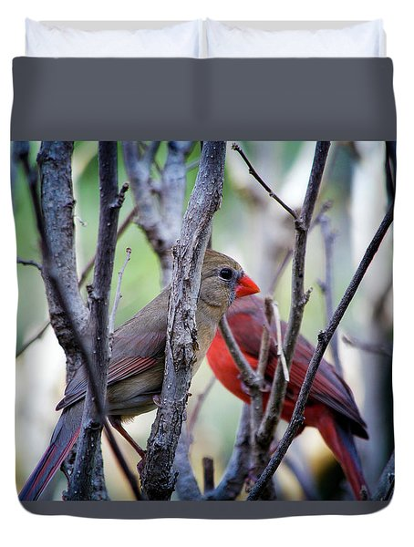 Cardinals Pair Duvet Cover
