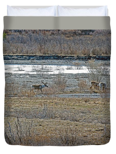 Caribou Feeding In Snow Fed River Duvet Cover by Allan Levin