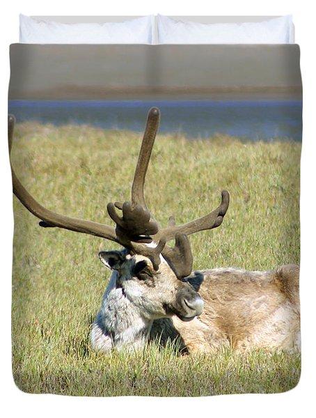 Caribou Rest Duvet Cover by Anthony Jones