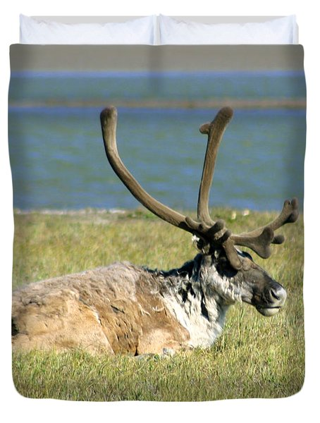 Caribou Resting Duvet Cover by Anthony Jones