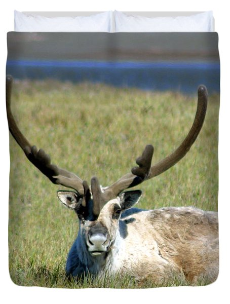 Caribou Resting In Tundra Grass Duvet Cover by Anthony Jones