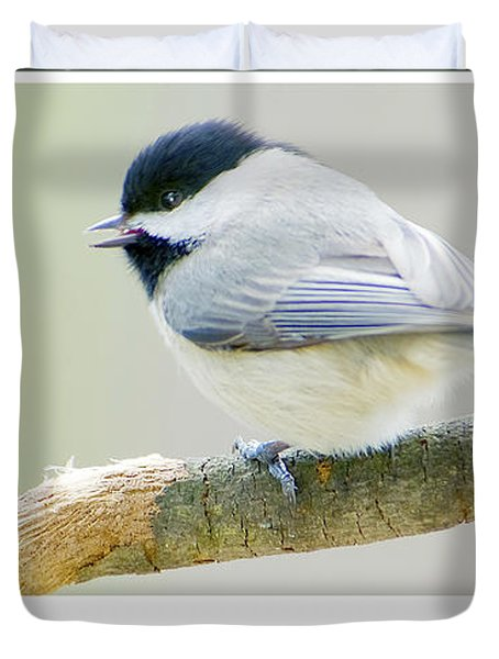 Carolina Chickadee, Animal Portrait Duvet Cover