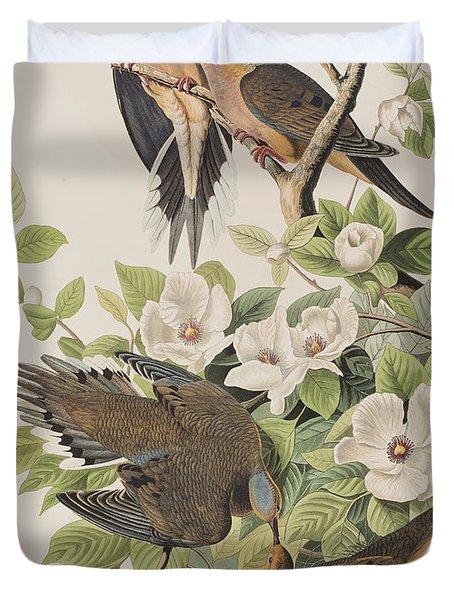 Carolina Turtle Dove Duvet Cover by John James Audubon