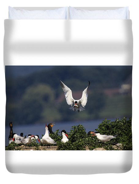 Caspian Tern Colony Duvet Cover by Gary Hall